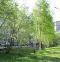 В Архангельске создаются понятные правила ухода за зеленью