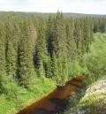 WWF оценил качество управления лесами в Архангельской области
