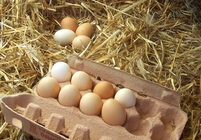 В Архангельской области подешевели куриные яйца, они стоят 32 рубля за десяток
