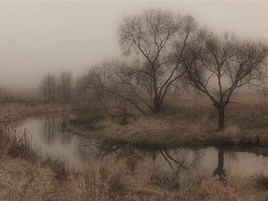 Ноябрь: в Архангельской области тепло и сыро