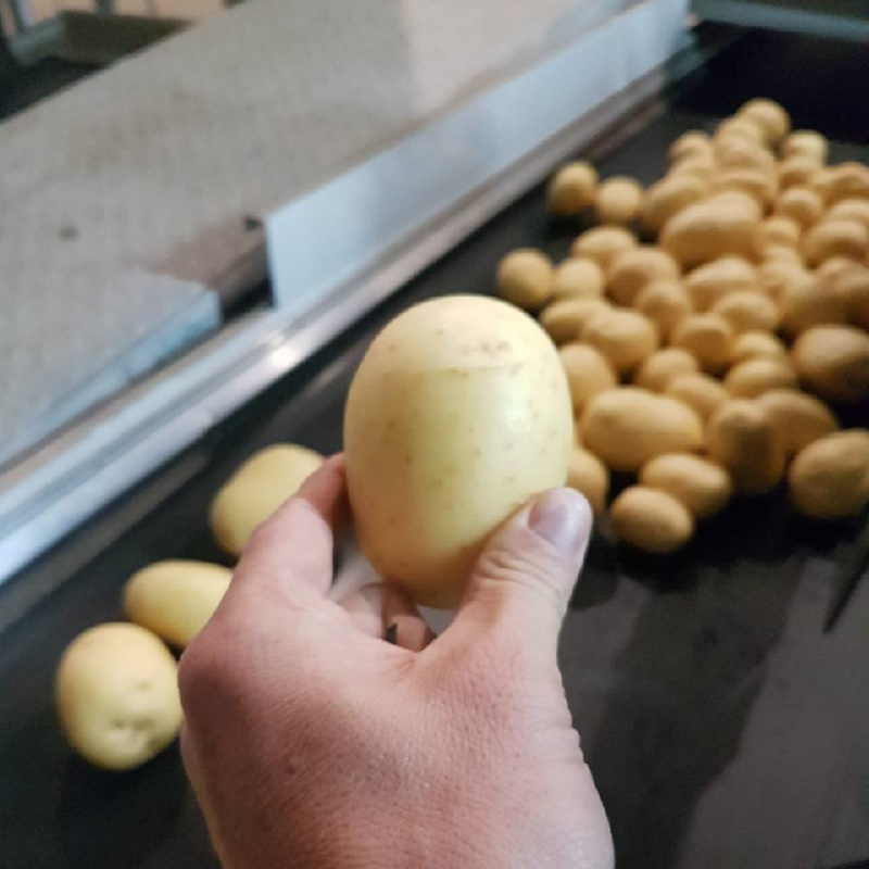 Сорт картофеля «Гала»: характеристики, сведения о сорте, выращивание