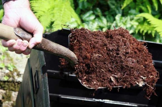 Посадка лука весной - все, что обязательно нужно знать огороднику об апрельской посадке лука