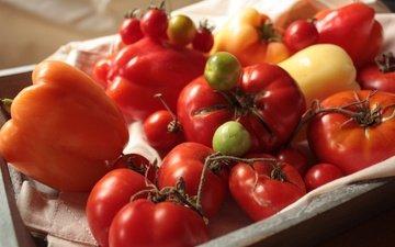 Лучшие подкормки для рассады томатов и перца: самые полезные удобрения для выращивания богатого урожая