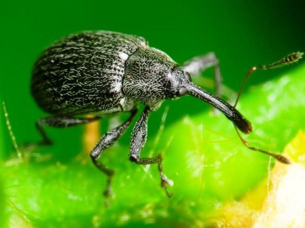 Весенняя обработка клубники: защита от вредителей и своевременная профилактика заболеваний